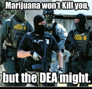 DEA - Marijuana has killed noone
