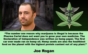 PP DRUG Marijuana Controlled By Pharma Cartel